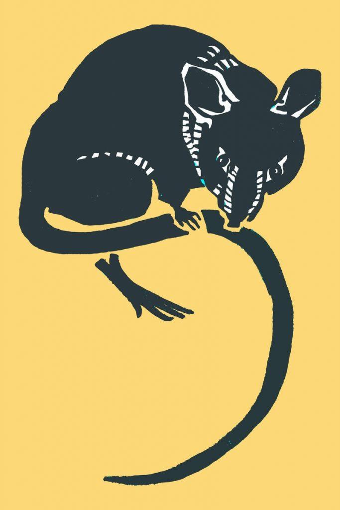 Daftar Penyakit Yang Dapat Ditularkan Oleh Tikus, Anda Wajib Waspada !